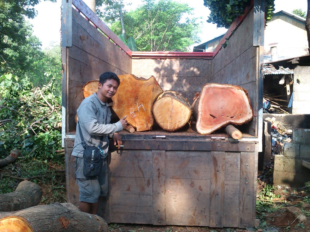 Proses pengangkutan pohon dari tebangan hutan